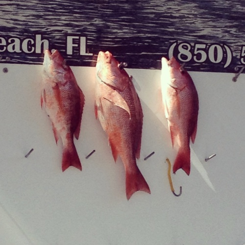 Fresh catch! All the red snapper you can eat.