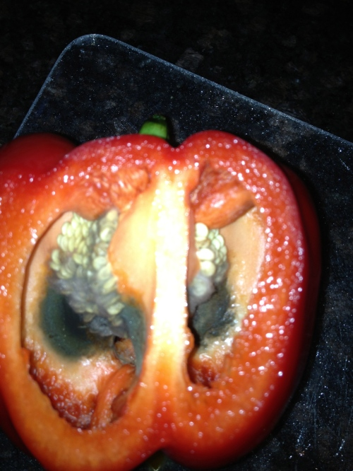 A very rotted red bell pepper that looked completely normal until I cut into it.